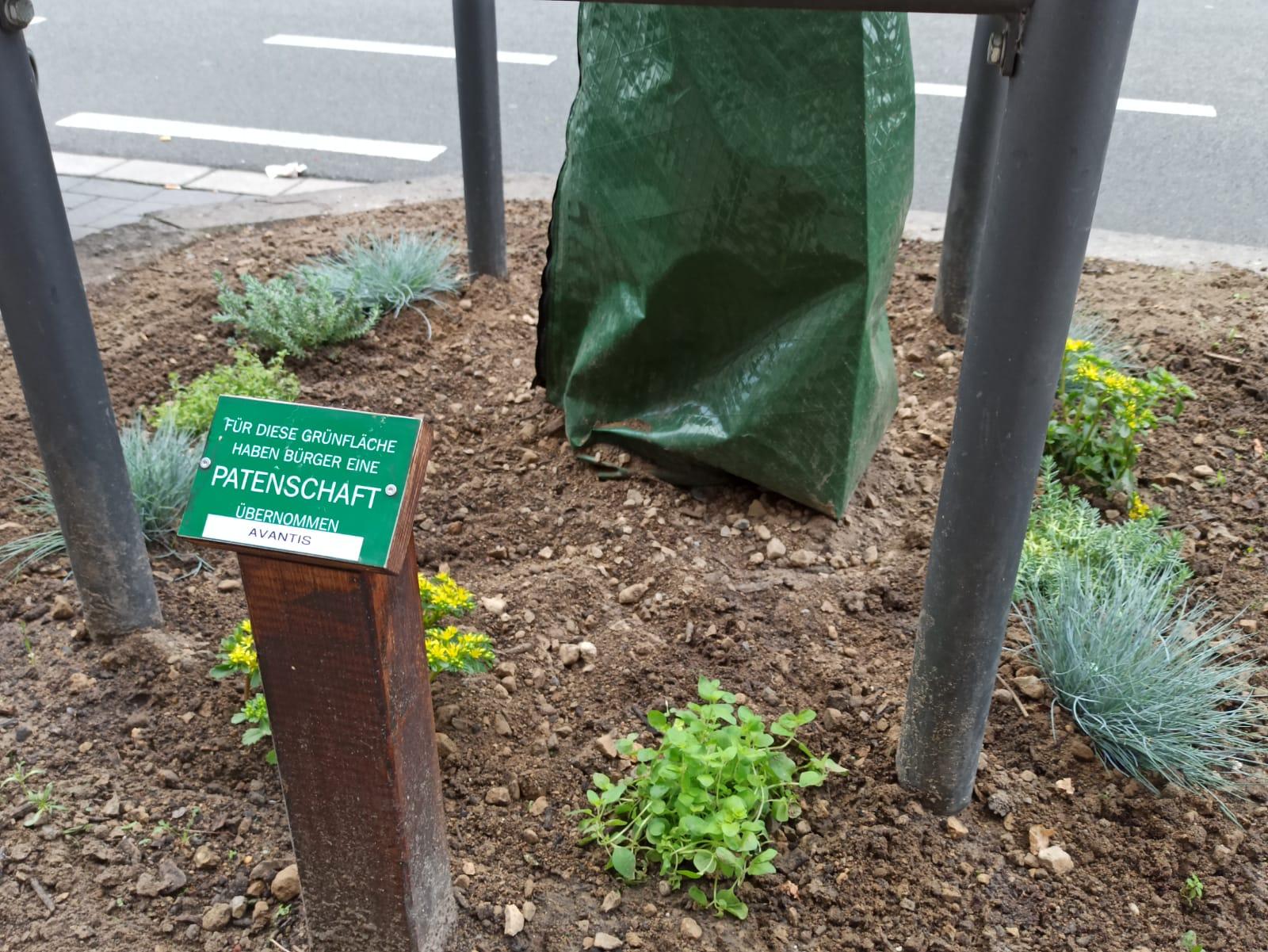 Grünfläche in Aachen Burtscheid Patenschaft