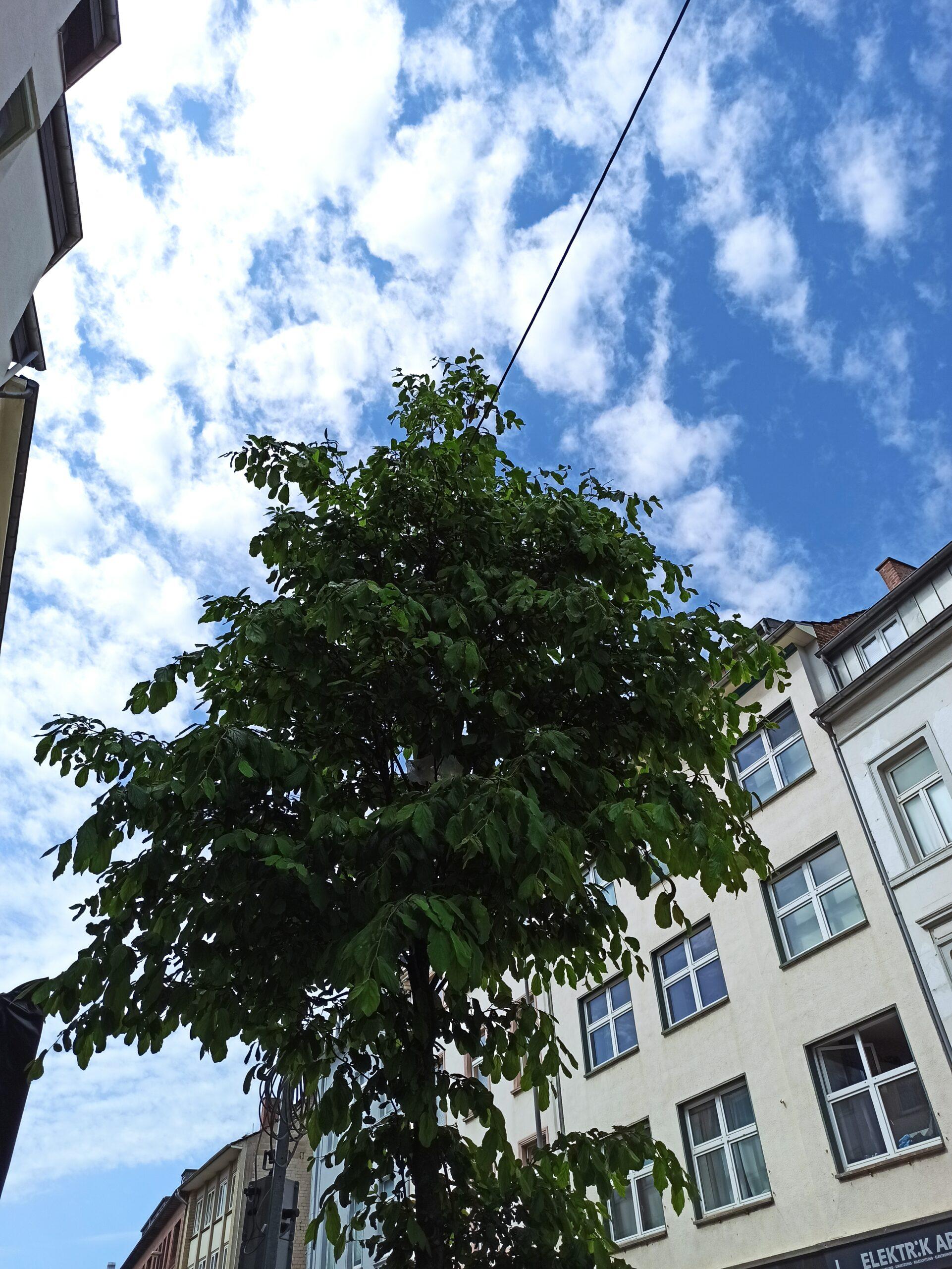 Gruenflaeche Aachen Pflegedienst Avantis